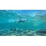 SEABIKE - Водно-подводно  колело