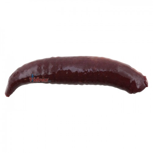 Изкуствена гъсеница Gulp! Floating Pinched Crawler 3 см Nightcrawler 1289607 - Berkley